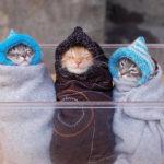 gatinhos-frio